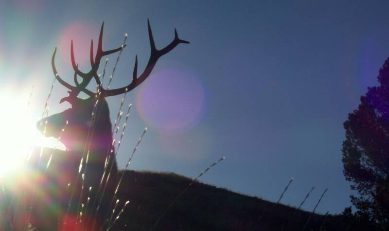 Links references for guided hunts in wyoming for Wyoming game and fish draw results
